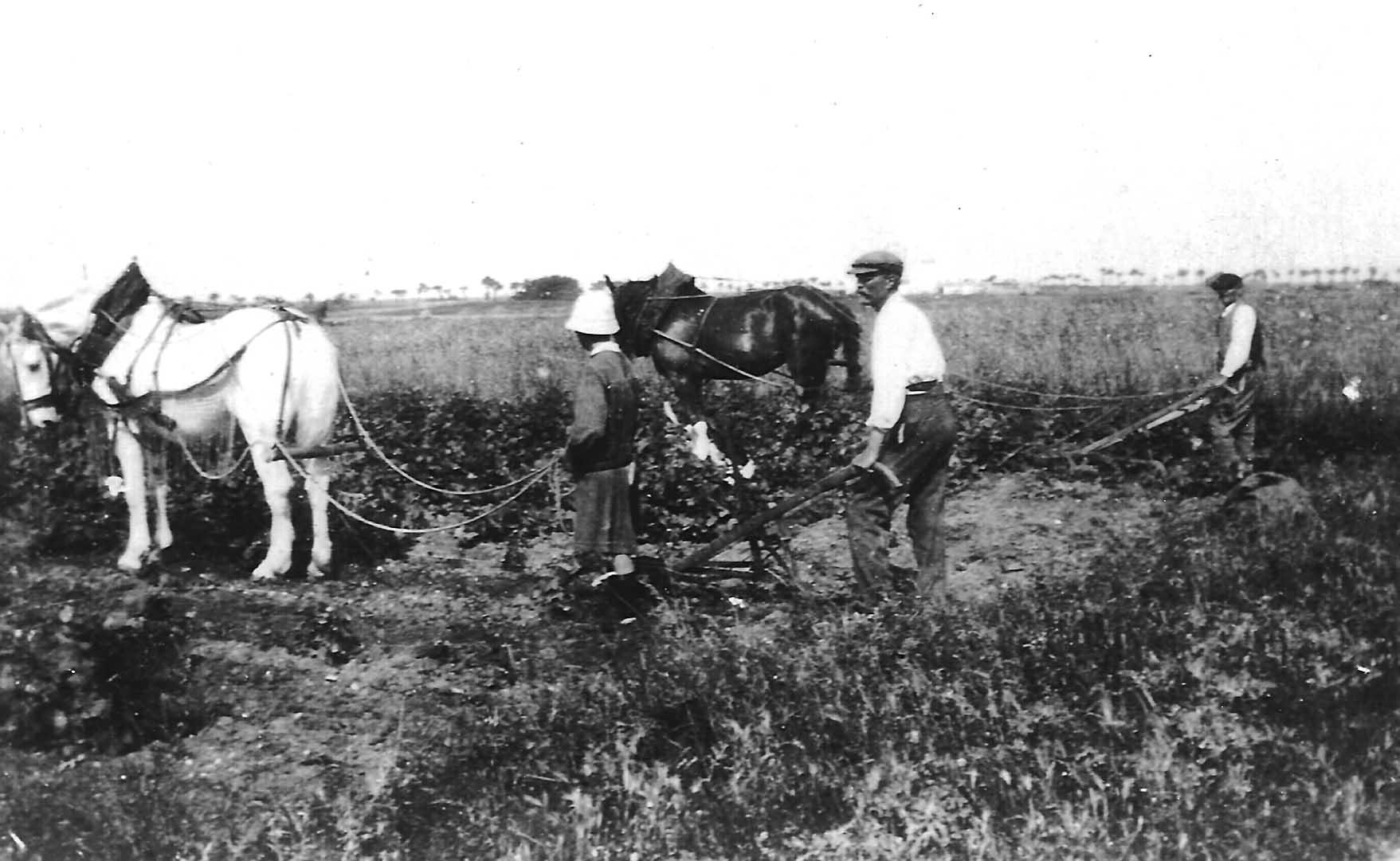 Jean Thémier guide un cheval au labour - Source : association AIDA