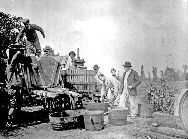 Vendanges en 1903 - Source : Association AIDA