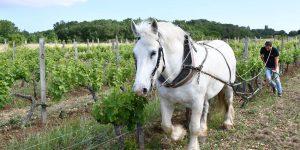 entretien des vignes à La Josière